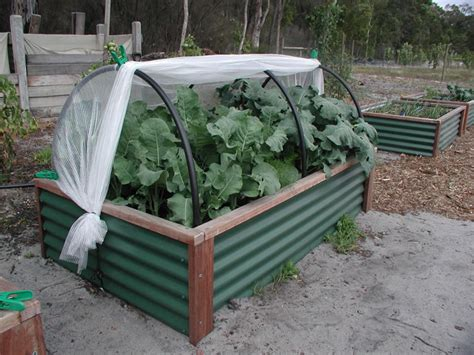 Raised Vegetable Garden Beds Corrugated Iron Corrugated Metal Raised Garden Bed Veggiepatch Links For