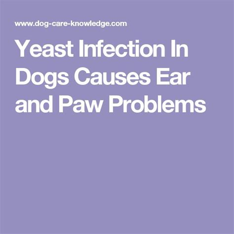 paw yeast infection home remedy 1000 images about for the dogs on