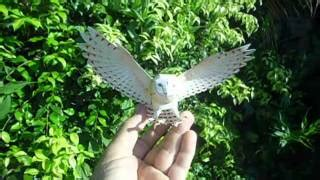 Canon Papercraft Snowy Owl - all comments on harry potter owned a snow owl this is a