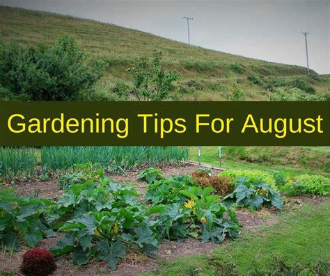 garden tips gardening tips for august
