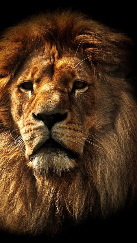 Iphone Wallpaper Hd Lion | lions iphone wallpaper hd iphone wallpaper
