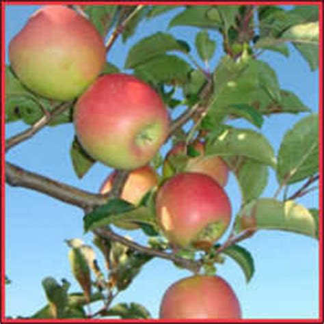 cross pollination fruit trees gardening picture