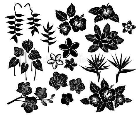 tropical exotic flowers silhouette set stock image image