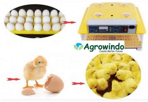 Jual Mesin Penetas Telur Ayam Semarang jual mesin penetas telur otomatis 48 butir agr tt48 di