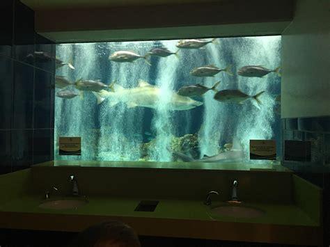 aquarium bathroom bathroom at odysea aquarium in az have a view of the shark tank instead of a mirror