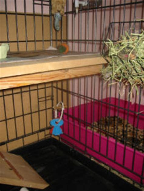 Rabbit Cage Shelf by Adding A Shelf To A Cage Crate For A Two Level Rabbit Cage