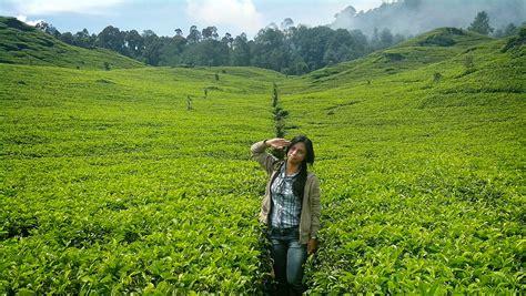 Teh Hijau Di Indonesia 9 kebun teh di indonesia yang akan membuat matamu jadi hijau yuk piknik