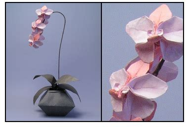Orchid Origami - orchids from origami