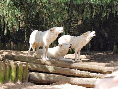 zoo de la fleche hotel 820 impressionnant picture of zoo de la fleche la fleche