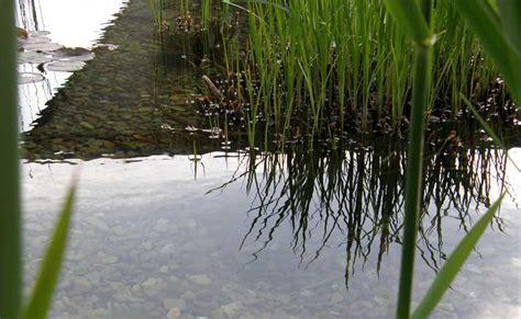 der garten steinberg steinberg g 228 rten pool for nature