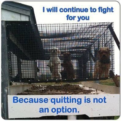 puppy mills in pa ronks kennel ronks pa animal welfare issues