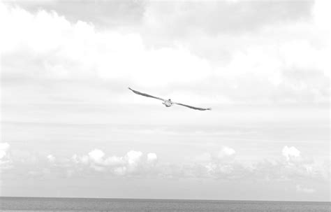 sky wallpaper black and white sea black and white flight sky hd grayscale images