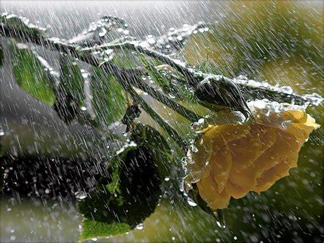 imagenes bellas lloviendo poemas con elwimg lluvia