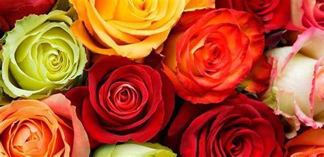 imagenes de rosas diferentes colores significado de los colores de las rosas