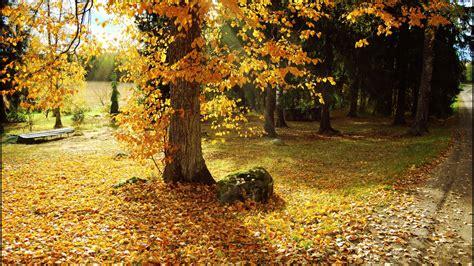 imagenes lindas naturaleza 150 fotos de naturaleza y paisajes muy bonitas im 225 genes