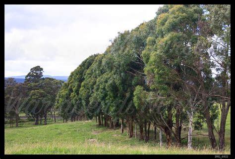 creating sustainable windbreaks native plant