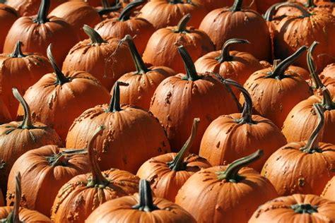 pumpkin patch lubbock  pdfsrealestates blog