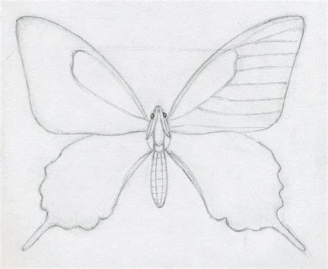 easy butterfly how to draw a butterfly jus 4 kidz