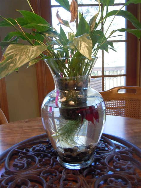 betta vase beta fish tank vase one of my favorites aquariums