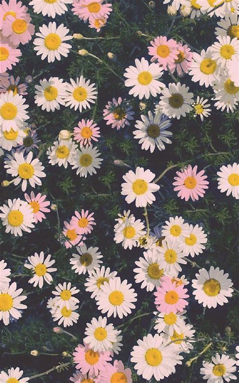 daisy pattern tumblr daisy wallpaper tumblr google search vingtage flower