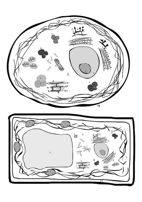 Animal Cell Coloring Animal Cell Coloring Page