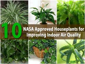 nasa air cleaning plants related keywords amp suggestions