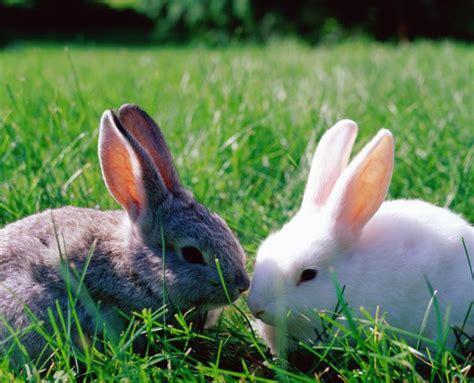 minicuentos de conejos y conoce las 7 razas de conejos m 225 s hermosas para adoptar