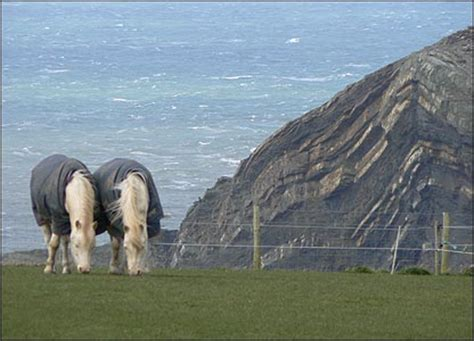 Oldest To Give Birth Guinness Book Of World Records Cbbc Newsround Pictures In Pictures Horses