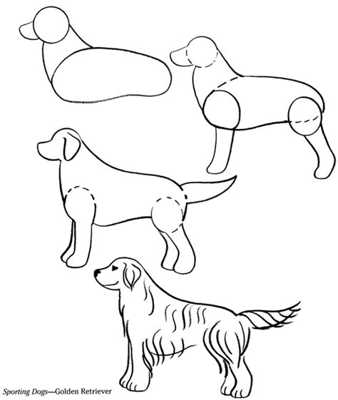 draw golden retriever puppy how to draw a golden retriever puppy auto design tech