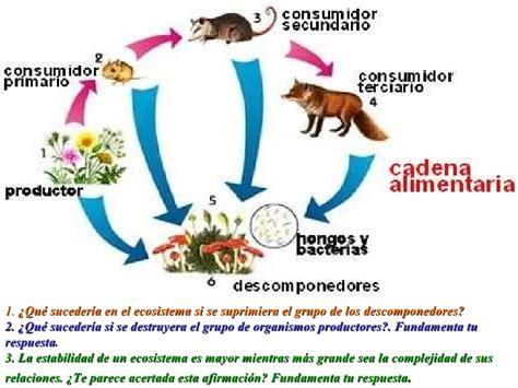 cadenas troficas del paramo ecosistemas2