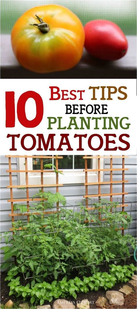 10 Tips On Growing Great Plants This Summer by 10 Best Tips Before Planting Tomatoes Plants Need To