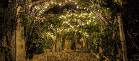 Charming Enchanted Forest Christmas Decorations #4: Enchanted-forest--1600x701.jpg