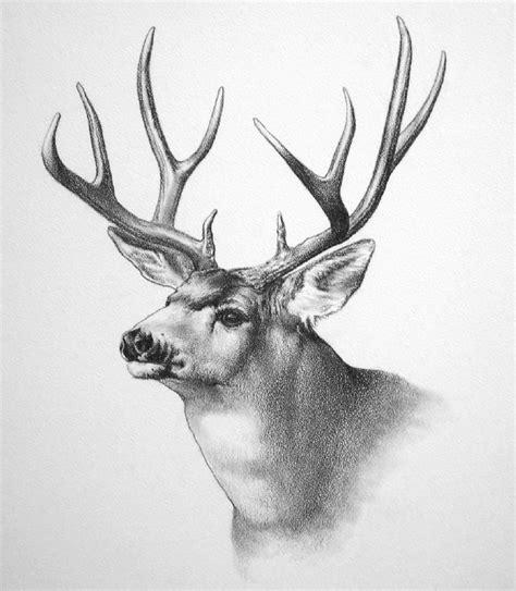 wildlife art by ken oliver at coroflot com