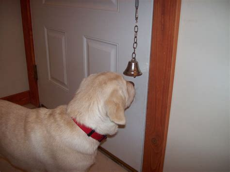 how to your to ring a bell how to teach your to ring a bell to be let outside breeds picture