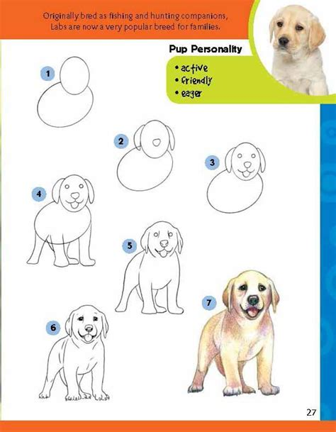 how to labrador in how to draw a labrador step by litle pups
