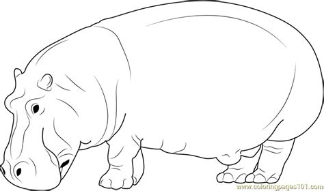 free coloring pages hippo wild hippopotamus coloring page free hippopotamus