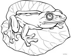 frog coloring pages frog coloring books for drawing
