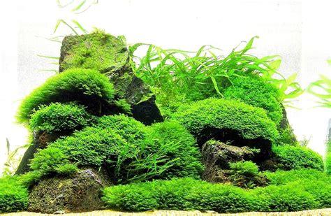moss on mesh live aquatic aquarium plants easy and best variety ebay