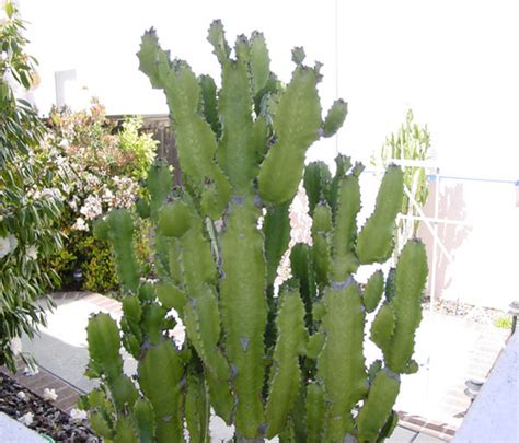 cacti succulents cactus succulent type plants names of