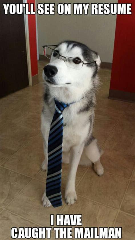 Funny Husky Meme - funny husky dog meme