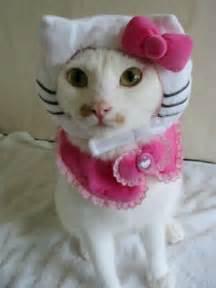 kitty cat kitty hell