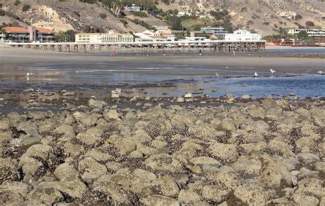 malibu lagoon state malibu ca california beaches