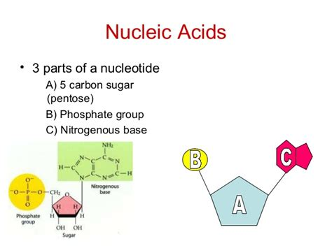 exle of nucleic acid organic compound folable
