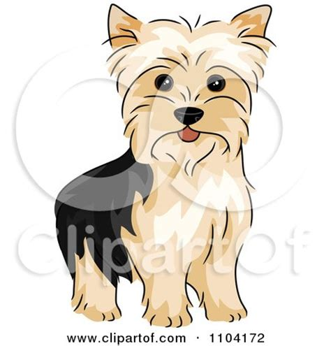 yorkie clipart royalty free rf yorkie clipart illustrations vector graphics 1