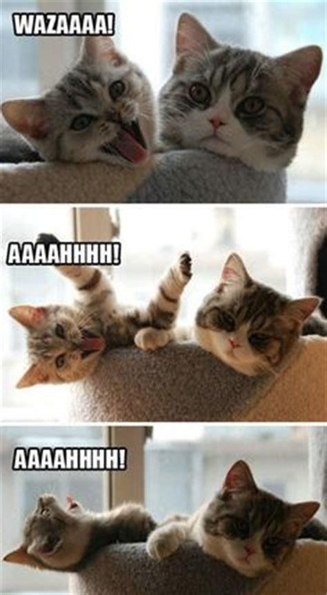 Annoying Cat Meme - meme tings on pinterest science memes memes and to
