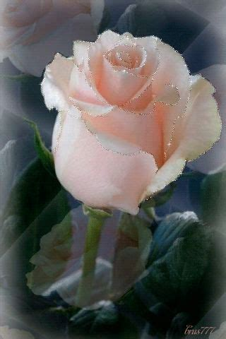 imagenes de rosas blancas para facebook 233 best images about flower gifs on pinterest la web