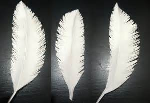 Make Paper Feathers - paper feathers create
