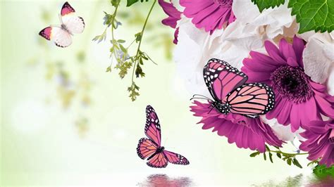 imagenes animes bonitas flores hermosas para fondo de pantalla 2 jpg 2560 215 1440