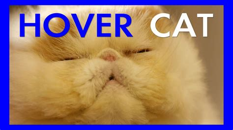 1452138923 how to be a cat hover cat ep 01 youtube