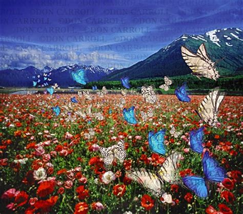 image of many butterflies flying over flower field / don